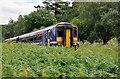 NM9634 : Train amongst  the ferns by Stuart Wilding