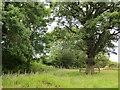 NY4447 : Field, Birkthwaite by Richard Webb