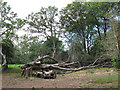 SU2509 : Fallen tree in Puckpits Inclosure by Stephen Craven