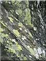SH6949 : Rock face and lichen by Andrew Hill