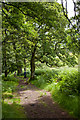 NS9699 : Path through the trees in Dollar Glen by Doug Lee