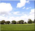 TM0986 : Meadow in Short Green by Evelyn Simak