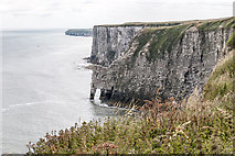 TA2073 : Bempton Cliffs, Yorkshire by Christine Matthews