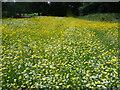 TQ2886 : Wildflower meadow at Parliament Fields by Marathon