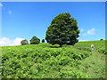 SO2857 : Going up Bradnor Hill by Des Blenkinsopp