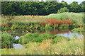 SK5744 : Valley Road Park Flood Plain, Nottingham NG5 by David Hallam-Jones