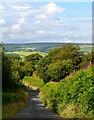 SS8224 : The Lane from Little Wadham to Wadham Cross, Devon by Edmund Shaw