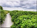SJ4082 : Mersey Way Coastal Path, Speke and Garston Nature Reserve by David Dixon