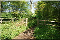 TQ1336 : Stane Street / Sussex Border Path by N Chadwick