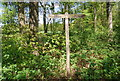 TQ1436 : Sussex Border Path signpost by N Chadwick