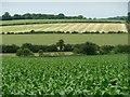 SU4840 : Spring-fed chalk valley, west of Hunton Grange Farm by Christine Johnstone