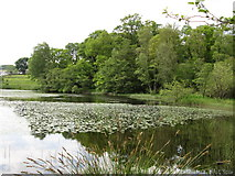 NS5379 : Tree reflections at Carbeth Loch by Peter S