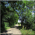 TL5060 : The trackbed of the Mildenhall Branch in July by John Sutton