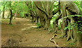 J4077 : Path and trees, Redburn Country Park, Holywood - July 2014(2) by Albert Bridge
