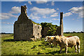 M4682 : Castles of Connacht: Island, Mayo (3) by Mike Searle