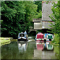 SJ7426 : Shropshire Union Canal at Knighton, Staffordshire by Roger  Kidd