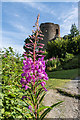 SO5074 : Rosebay Willowherb and Ludlow Castle by Ian Capper