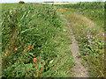 TL3289 : A slight bend in Broadall's Drove by Richard Humphrey