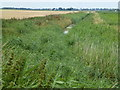 TL3191 : Reed filled drain on Ramsey Fen by Richard Humphrey