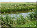 TL3290 : On the bank of The River Nene (old course) by Richard Humphrey