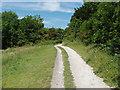 TQ0449 : Chalk Downland, Surrey by Alan Hunt