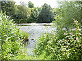 NT7133 : River Teviot by Oliver Dixon