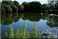 SE8043 : Pond near Ponds Farm on Halfacres Lane by Ian S