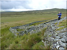 SH7942 : Sheepfolds to the east of Cefngarw by Richard Law