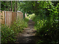 TQ0760 : Footpath by the River Wey by Alan Hunt