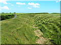 SY5494 : Iron age hillfort on Eggardon Hill by Oliver Dixon