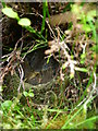NY2730 : Meadow Pipit's Nest by Michael Graham