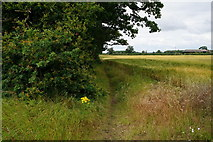 SE6548 : The Minster Way near White House Farm by Ian S
