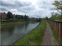 TM1543 : Gipping Valley River Path, near Princes Street bridge by David Smith