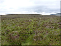 SH8143 : The start of a re-forestation? by Richard Law