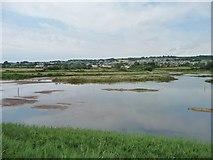 SY2591 : Southern side, Black Hole Marsh, Axe Estuary wetlands by Christine Johnstone