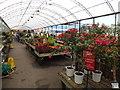 SJ3861 : Plants for sale by Richard Hoare