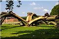 SP2757 : Oak tree struck by lightning by David P Howard