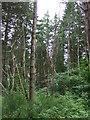 NJ0258 : Woodland near Forres by JThomas