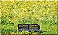 J3067 : Seat and wildflowers near the Drum Bridge, Dunmurry (July 2014) by Albert Bridge