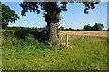 SE6953 : Footpath marker near Lime Field Farm by Ian S