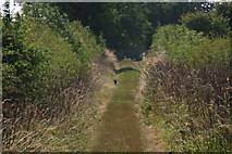 TF3066 : Lincolnshire puma on the bridleway to low Hameringham? by Chris
