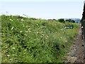 SU6434 : The Watercress Line near Ropley Soke by David Dixon