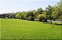 SU9850 : Green space - Surrey University campus by Given Up