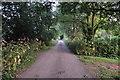 ST0204 : Mid Devon : Country Lane by Lewis Clarke