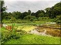 SU5833 : Watercress Beds, Alresford by David Dixon