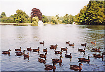 SU8083 : Downstream on River Thames at site of former Medmenham Ferry, 2003 by Ben Brooksbank