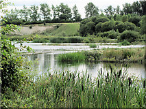 SP9314 : A View across the Marsh at College Lake, near Tring by Chris Reynolds