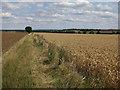 TL2466 : Bridleway to A1198 by Hugh Venables