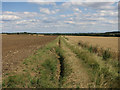 TL2466 : Ditch by bridleway by Hugh Venables