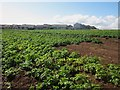 NT9364 : Arable field on the edge of Eyemouth by Graham Robson